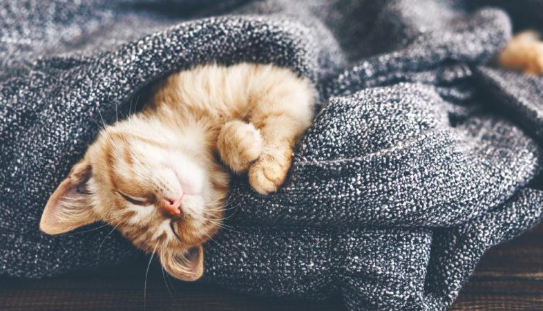Les chatons et le liniment